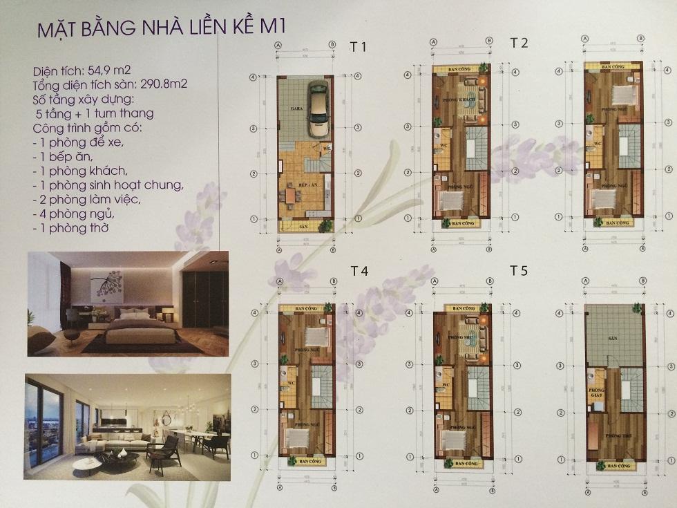 Thiết kế mẫu M1 nhà liền kề Lavender