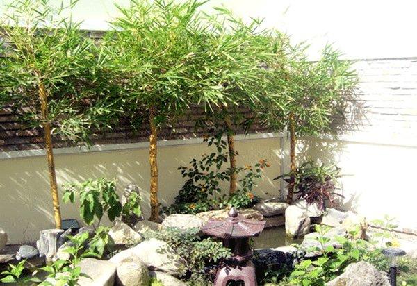 Kết quả hình ảnh cho trồng cây phong thủy